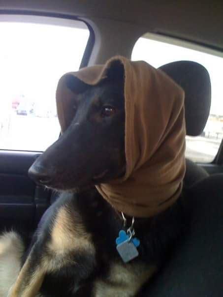 iran bans dog walking green prophet impact news