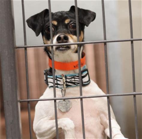 puppy mills in colorado puppy mills colorado photo
