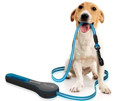 how to leash a puppy why you always need to use a leash basics