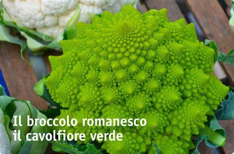 cucinare broccolo verde il cavolfiore di colori diversi e molti usi in cucina