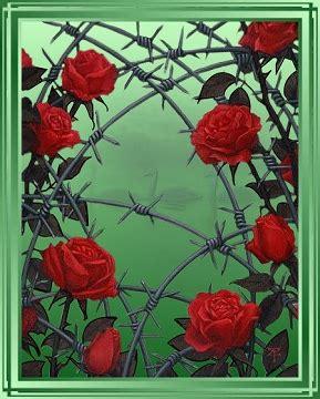 imagenes rosas con espinas rosas con espinas imagui
