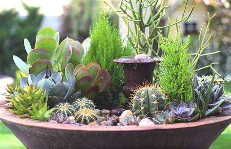 Garden Answer Garden How To Create A Stunning Succulent Arrangement