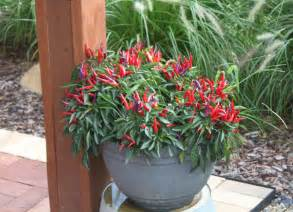 patio plants keeping potted plants and hanging baskets beautiful all