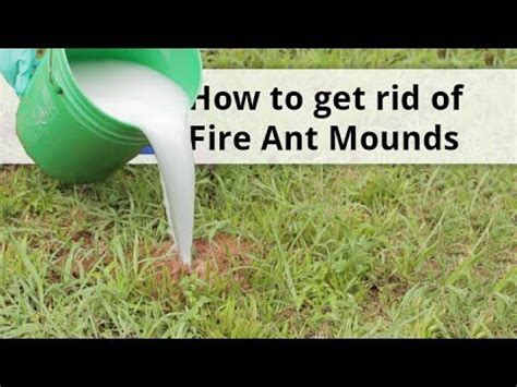 how to get rid of kill ants ant treatment