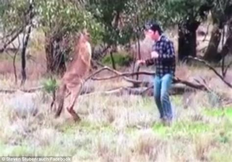 kangaroo has in headlock boxes kangaroo to save his