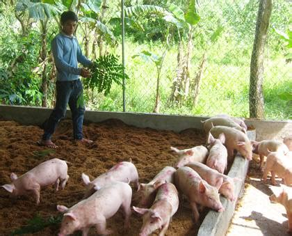 Backyard Piggery Business by Livestock And Farming At The Goducate Children S Home Goducate Go And Educate