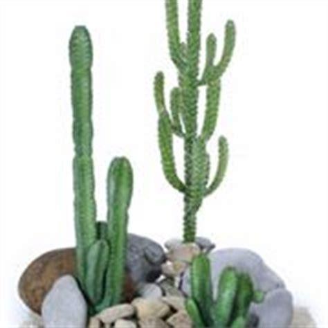 cactus da interno cactus da interno 28 images it piante da interno