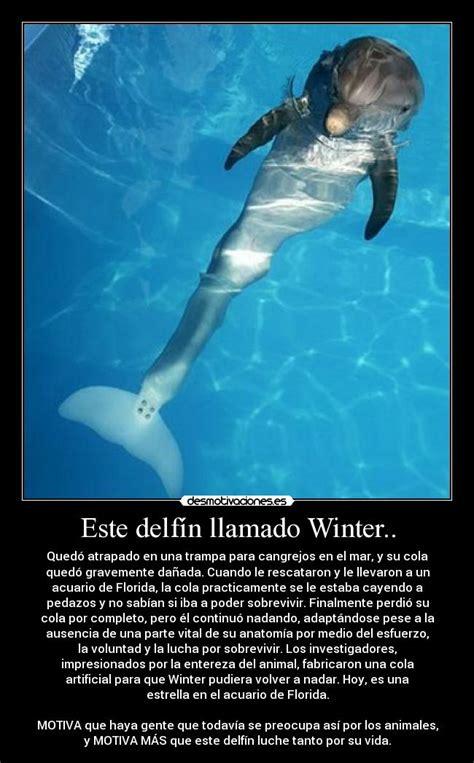 imagenes reales de winter el delfin usuario dearimasu desmotivaciones
