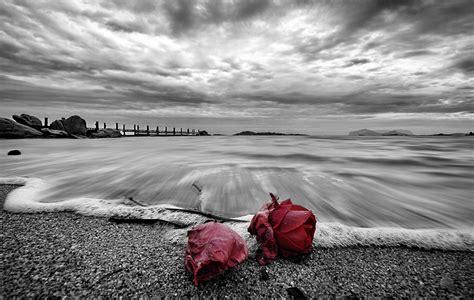 Imagenes Rosas En El Mar | im 225 genes de rosas en el mar imagui