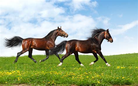 alimentazione cavallo l alimentazione cavallo sportivo