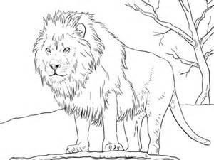 disegno leone africano maschio da colorare disegni da colorare stampare gratis
