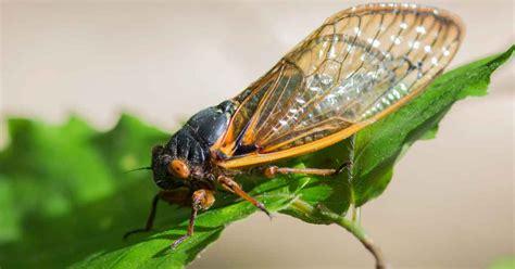 identify  control common plant pests