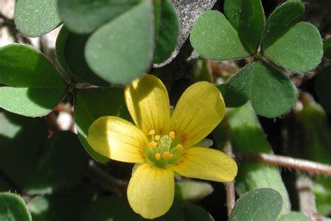 common weeds in the galvestonhouston region