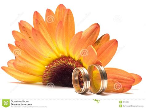 Wedding Concept Images by Wedding Concept Stock Images Image 4919694