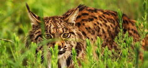 imagenes animales y plantas en peligro de extincion animales y plantas en peligro de extinci 243 n enciclopedia