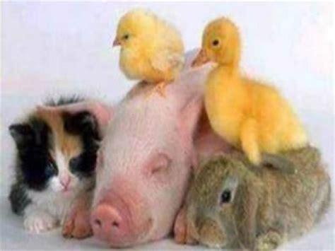imagenes de animales lindos lista el animal mas lindo y tierno