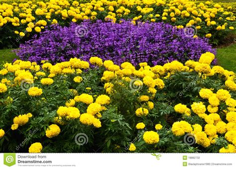 Yellow Flower Garden Purple And Yellow Flower Garden Stock Photo Image 18882732