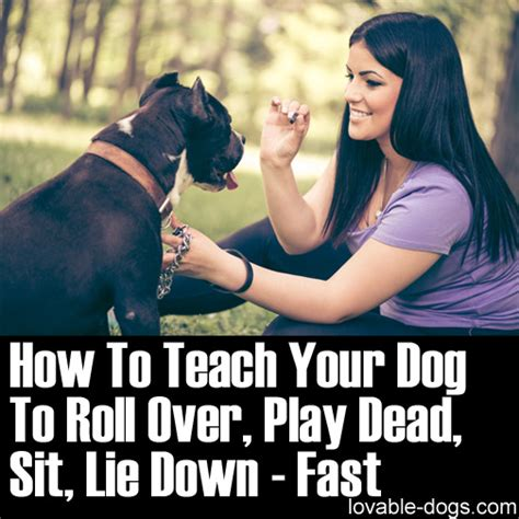 lovable dogs how to teach your dog to roll over play dead sit lie down fast lovable dogs