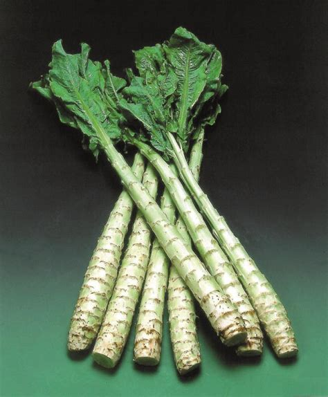 celtuce seeds 163 1 85 from chiltern seeds chiltern seeds