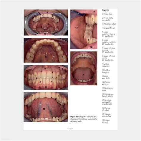 assistente alla poltrona manuale manuale per assistente di studio odontoiatrico rista