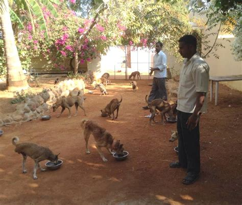 puppy feeding times feeding time by vj supera karuna society for animals and nature