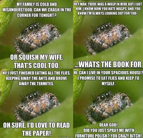 Spider In House Meme - cute spiders phil ebersole s blog