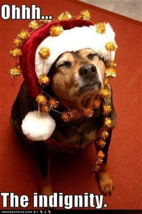 Christmas Dog Meme - happy holidays funny dogs pinterest
