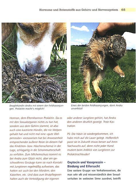 hund kastrieren wann kastration und verhalten beim hund buch bei weltbild de
