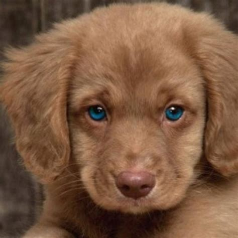 how much is a golden cocker retriever 17 best images about dogs on kinds of dogs the golden and my