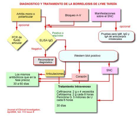 cadena epidemiologica treponema pallidum enfermedad de lyme