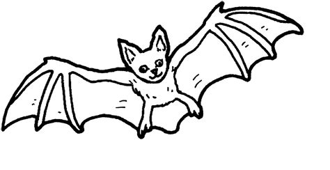 bat coloring pages free coloring pages of baby bat