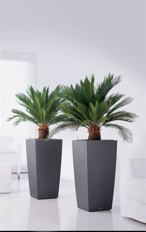 Plant Containers For Sale Best 25 Planters Ideas On Outdoor Potted