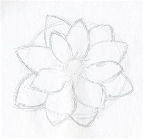 easy sketches lotus flower drawings made easy