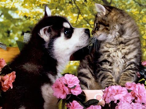 puppies  kittens wallpapers wallpaper cave