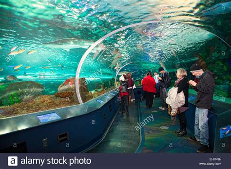 aquarium design toronto ripleys aquarium in toronto ontario canada tourist
