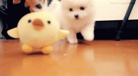 puppy gif gif dogs photo 29036051 fanpop