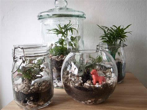 Container Home Interior Design by How To Make A Terrarium A Step By Step Diy Tutorial
