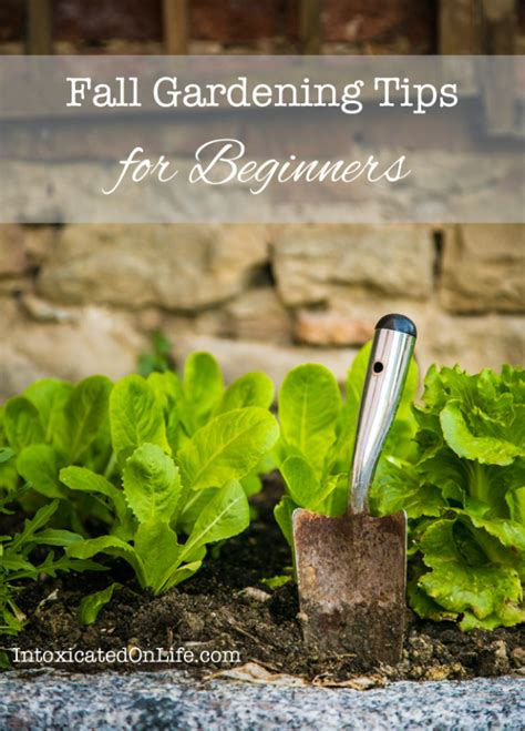 garden tips 33 diy gardening ideas for fall diy joy