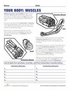 muscle worksheets and the body on pinterest