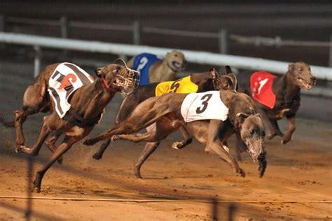 greyhound racing greyhound racing race card drinks jurijs