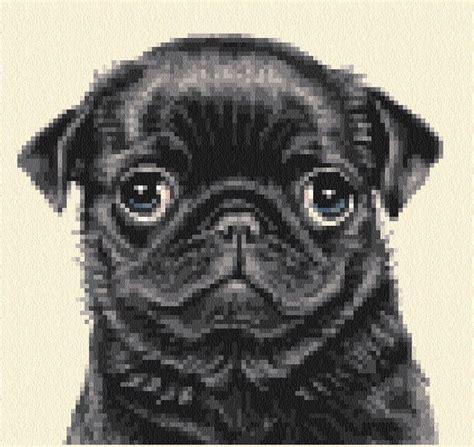black pug cross 12 best pug cross stitch images on punto croce crossstitch and pug cross