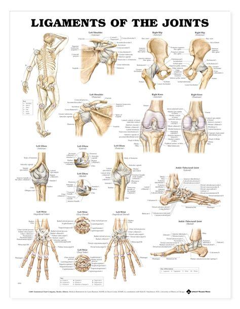 anatomy bones foot bone anatomy chart human anatomy charts