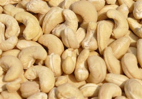 Cashew Nut cashew farming detailed information guide agri farming