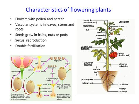 sexual reproduction in plants ppt download