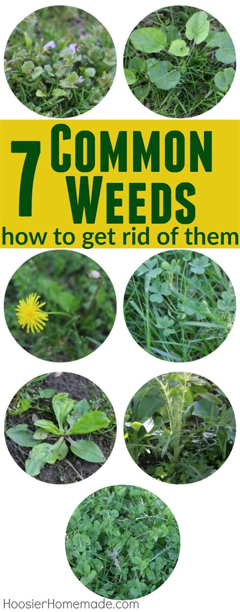 how to get rid of grass in flower beds 7 common weeds with identification pictures hoosier homemade