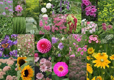 september flowers the flower farm