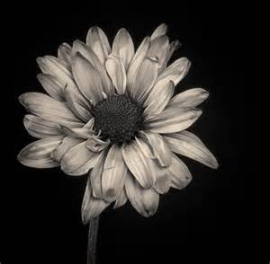 color black and white photos black and white photo with color flowers