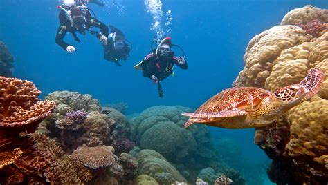 le dive port douglas scuba diving trips best outer great barrier