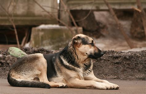 how to house train a stray dog stray dogs in detroit are a growing problem all pet news