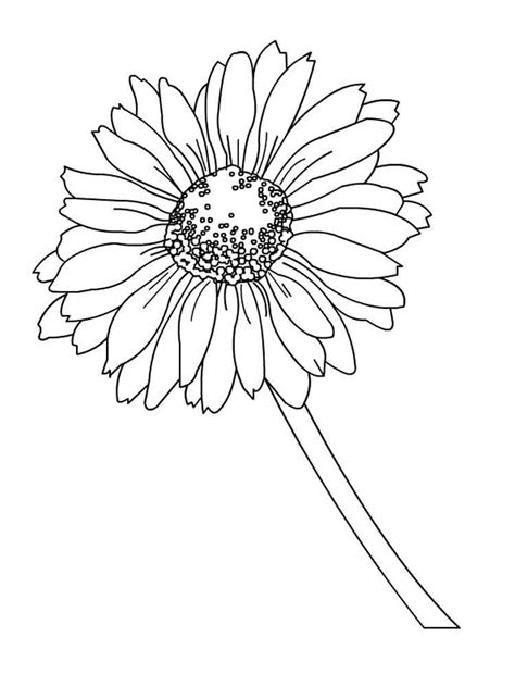 coloring page daisy flower daisy flower coloring pages download and print daisy